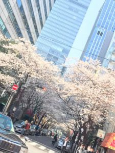 ジャパンバーテンダースクール桜の名所